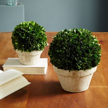 boxwood-round-trees-c